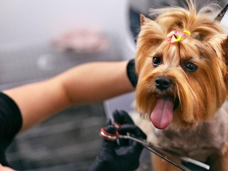 Materiały reklamowe dla firmy Dog Star